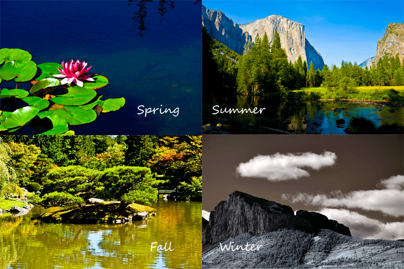Photo of Seasons - lotus flower for spring; El Capitan for Summer; Pine Tress in Seattle Japanese Garden and Montain in Alberta for Winter
